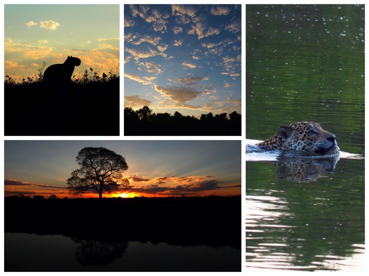 Hotel Pantanal Wildlife