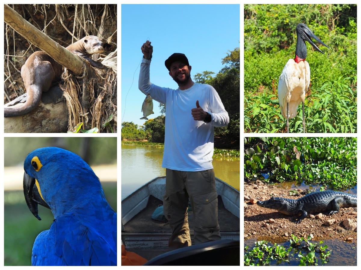 Piranha Fishing Pantanal