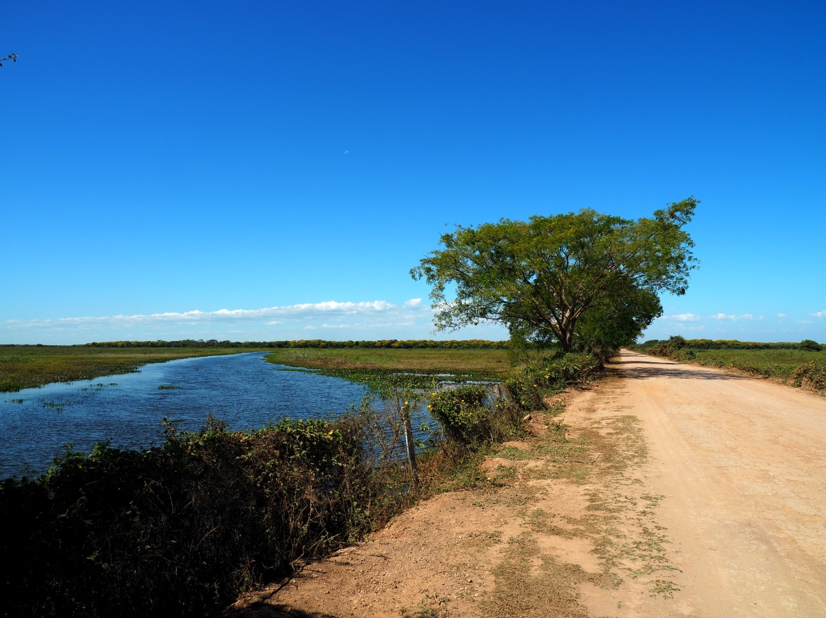 The Transpantaneira and the Pantanal of Brazil