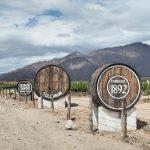 Vineyard in Calafate, Argentina